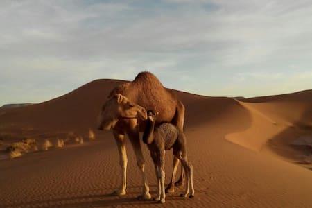 Chez l'habitant, aux portes du Sahara - Mhamid - House