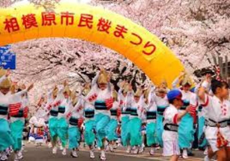 Sagamihara Cherry Blossom Festival