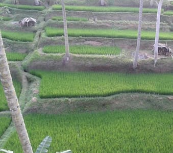 Cottage ricefield view