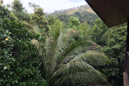 Spacious home in rainforest setting - Kamerunga