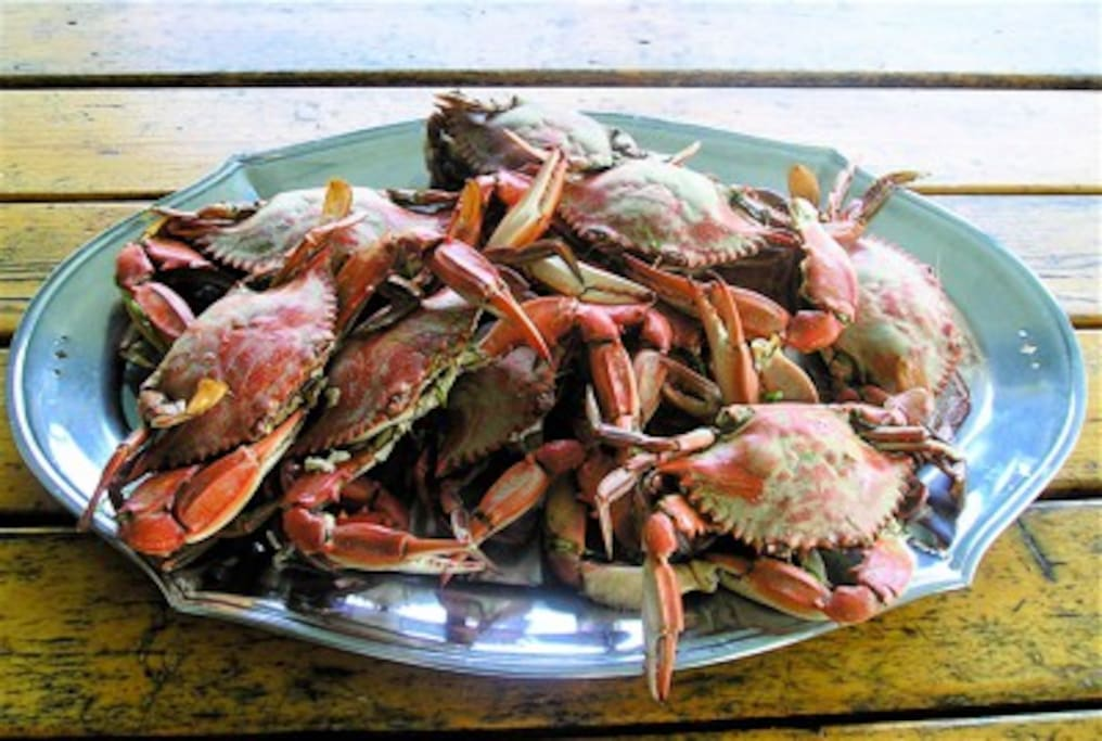 Catch your fresh seafood dinner from our dock and enjoy on the Screened Porch