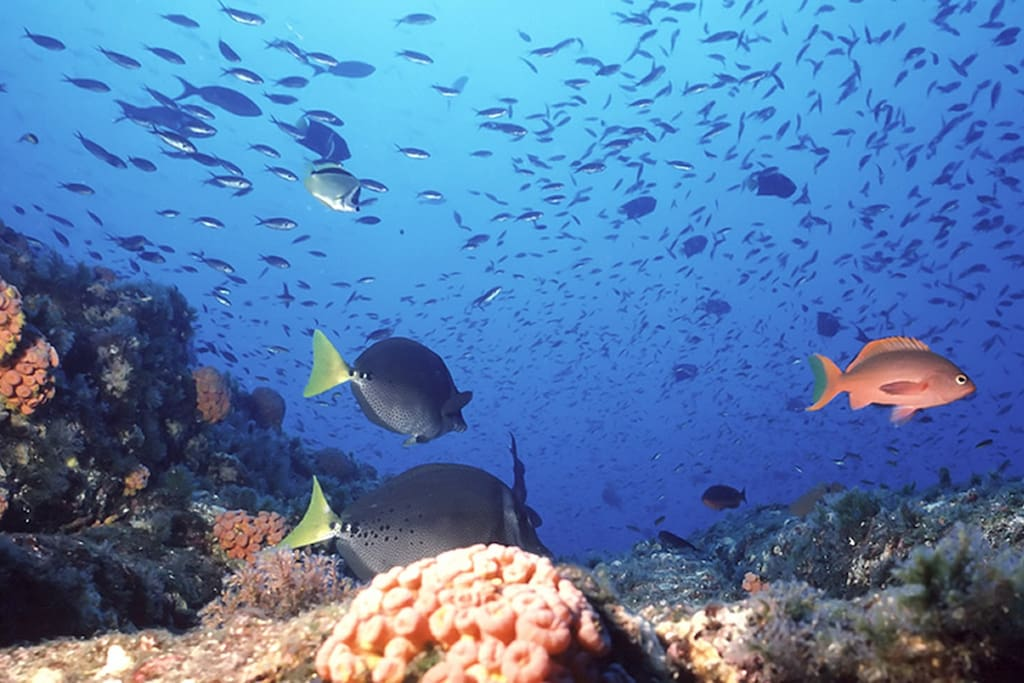 A glimpse under the surface of Dahab's famous reefs