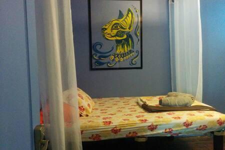 The Cat Lady Suite