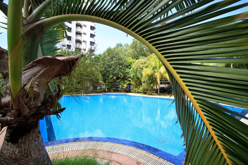 The swimming-pool, plain view.