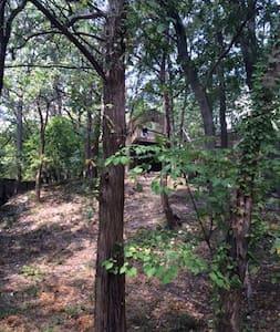 Cozy Loft near Gexa Energy Pavillion - Dallas