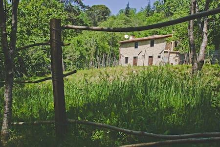 Casa Paladini - House