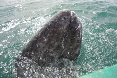 Cabañas para visitar las ballenas.