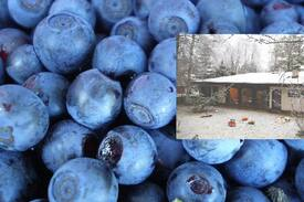 Picture of The Blueberry Bedroom No. 2