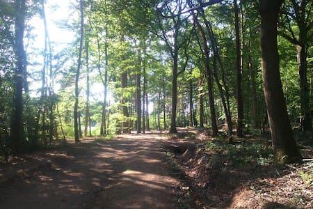 Forêt de troncais à 2 pas