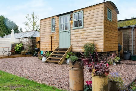 witherdon wood shepherds hut and beavers, devon - Hut