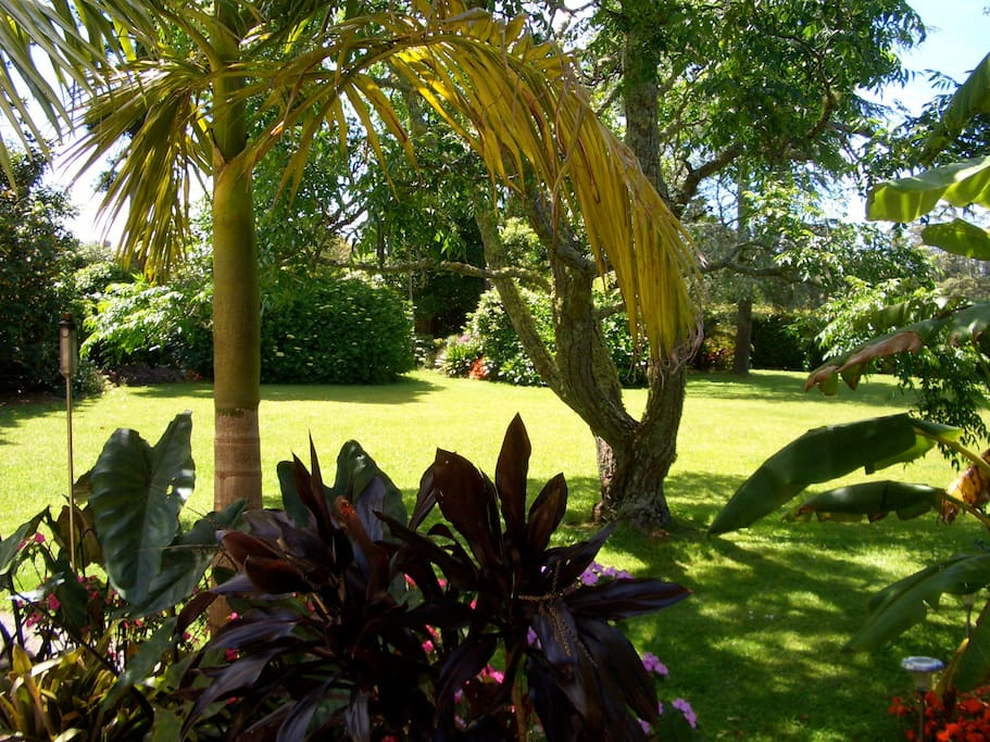 Some of the sub-tropical park like gardens which surround the Lodge and  solar heated swimming pool.