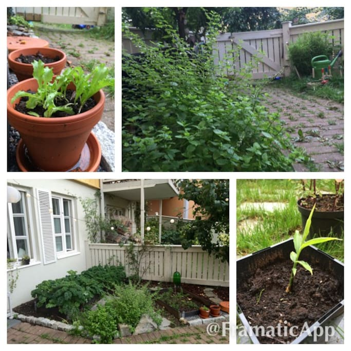 Own veggie garden! Salads, ginger, cale, carrots, tomatoes, peppermints, rosemary … only your imagination is the limit!