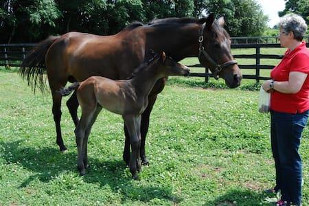 Gentleman Horse farm - Atene - Bed & Breakfast