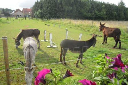 Slapen tussen ezels in de Pipowagen - Aarschot - Karavan/RV
