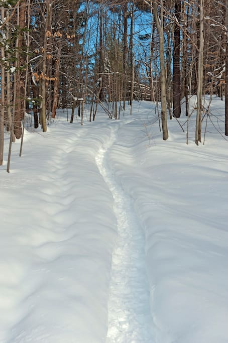 Snowshoe the trails right outside the cabin door.