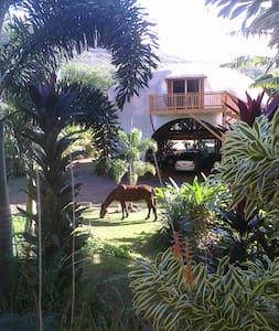 Kauai's Monolithic DOME home - Andere