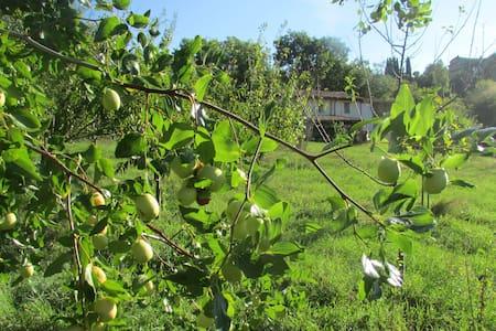 Fruit trees/History/Frutteto/Storia - Torri In Sabina