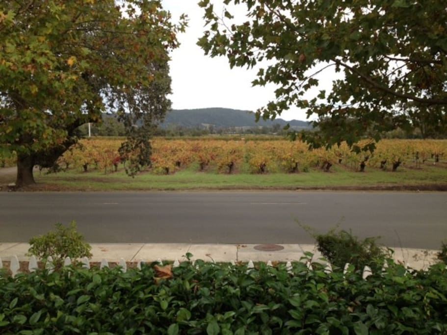 Fall in the vineyard - view looking directly from the Sunshine Suite.  ..  .