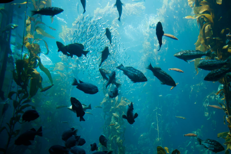 The beautiful Monterey Bay Aquarium, complimentary passes!