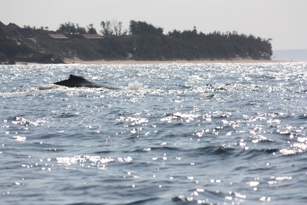 Whales sighted often - we are the house on the left of the picture above the whale. You don't get better locations than this.