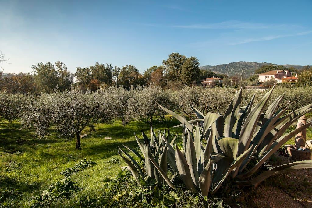 Casa Carizia in the olive grove