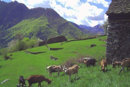 Scinghiöra-Agri 1-Rustico-Monti - Brontallo