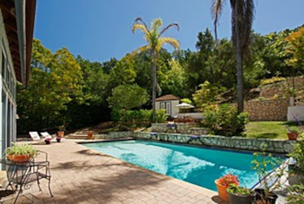 Large pool in the backyard oasis!