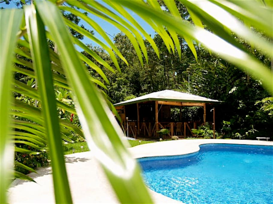 Pool and dining area encompassed by the jungle