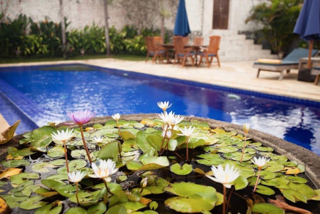 Pool Lillies