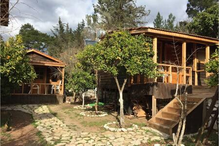 Olympos orman evleri yoga doğa - Yazır Köyü - Bungalow