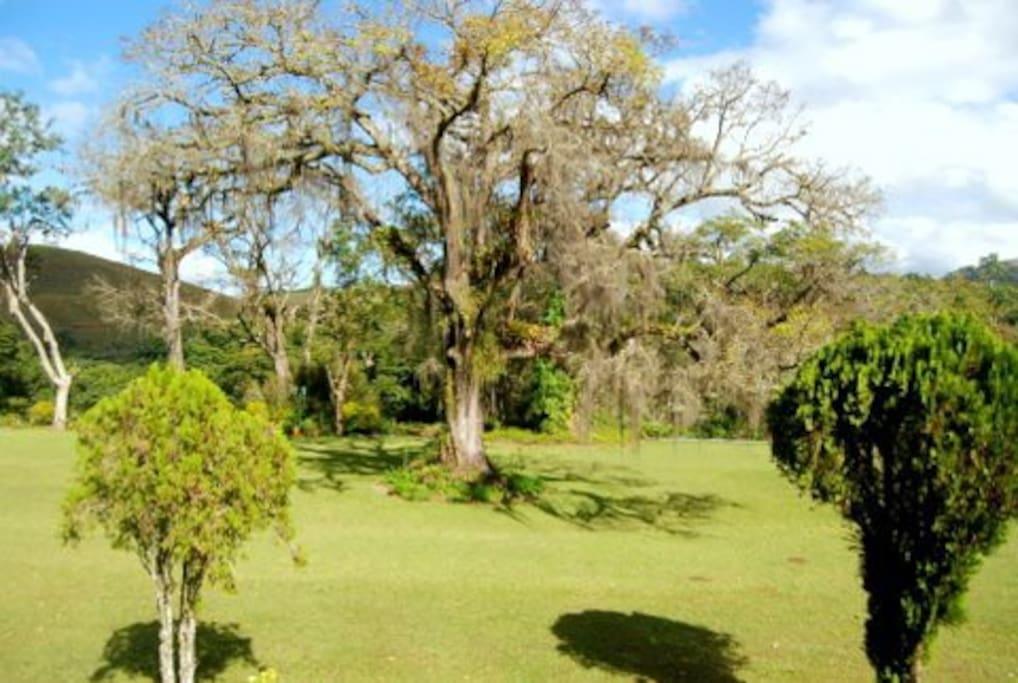 Gramado Central com árvores centenárias em frente à sede colonial