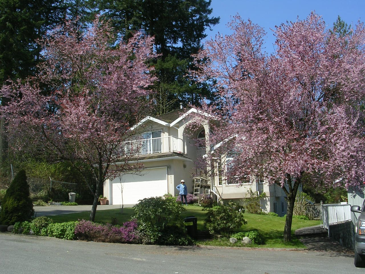 front of house with springtime cherry trees in bloom