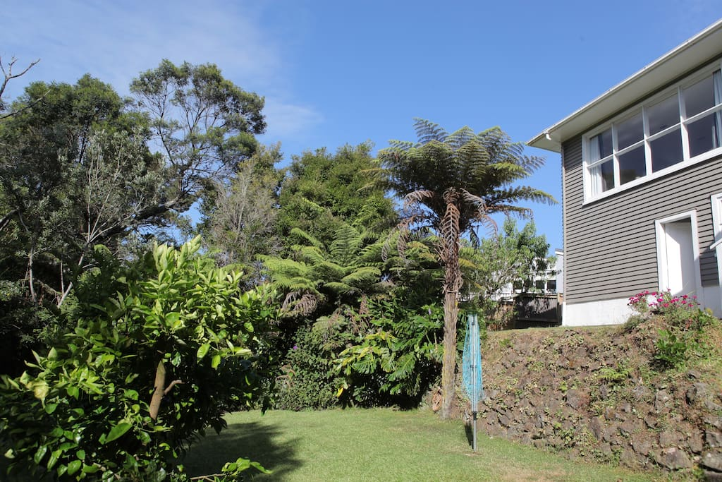 Back garden - where you can find lemon, peach, fig trees