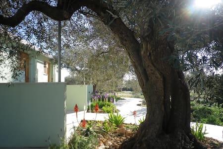 Quiet large family S/C Olive farm. - Tortosa
