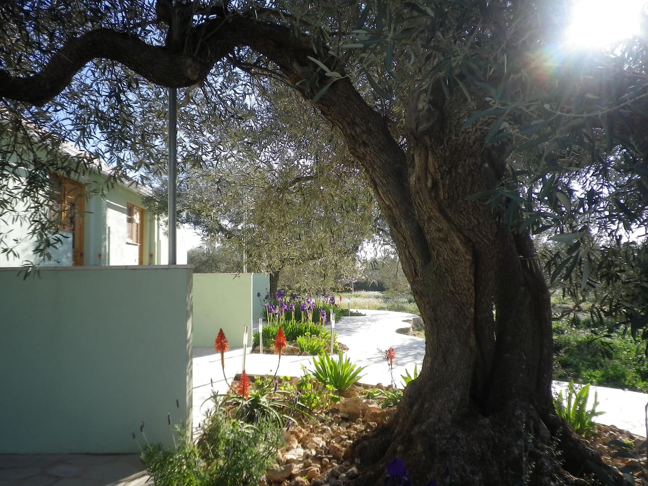 The Lodge from under an olive tree.