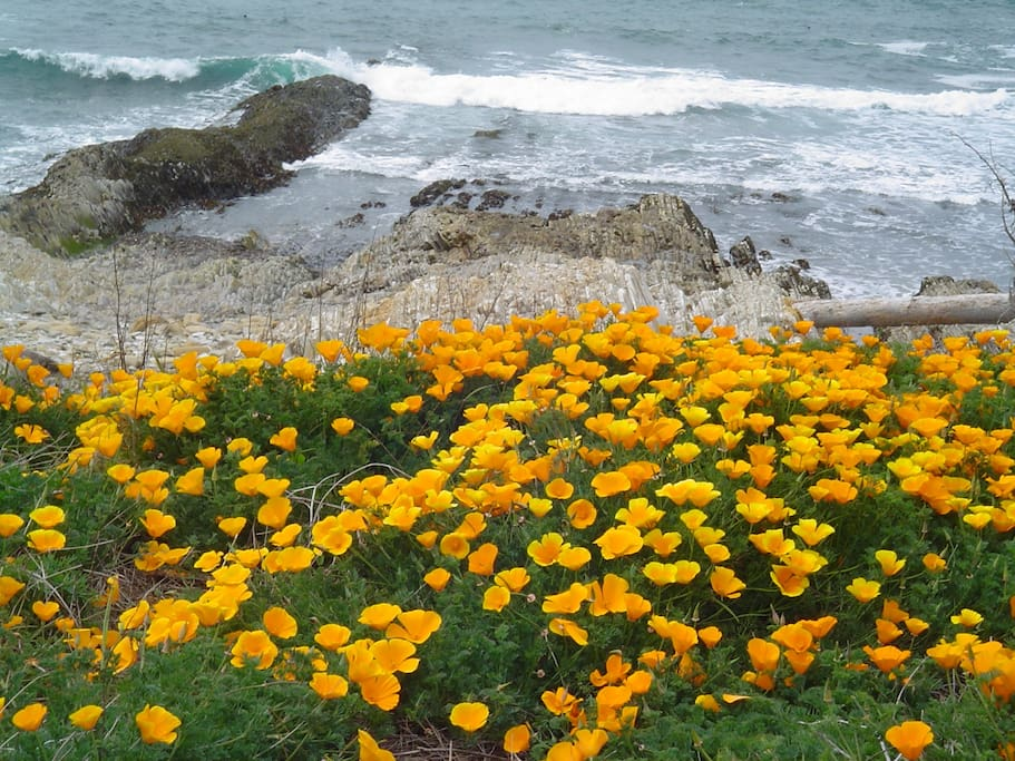 Montana De Oro State Park- 10 minute drive. Breathtaking unspoiled bluffs and ocean trails for hiking, biking or kayaking.
