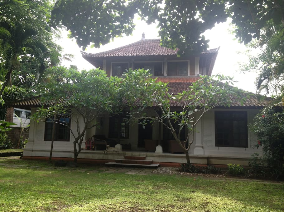 Big Balinese style house with lovely, shady garden. Available room with ensuite is the room on the right hand of the photo.