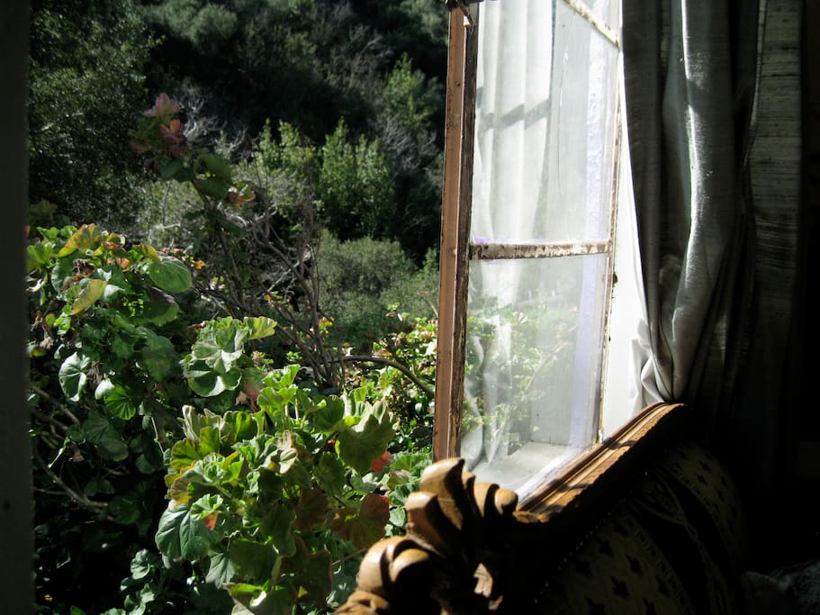 window opens to smells of sage and sounds of parrots, hawks, crickets and coyotes...