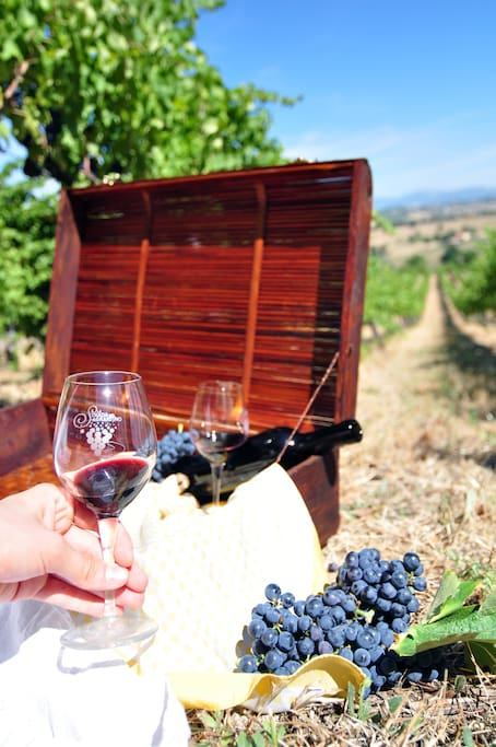Pic-Nic in our vineyards: organic wine and chesees