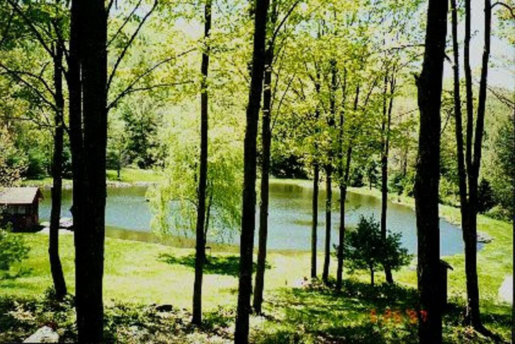 Early spring view of the pond from the screened in porch.