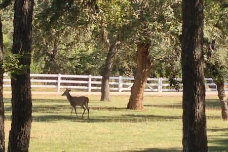 Deer Run Bed and Breakfast Hawk's Nest Suite - Austin - Bed & Breakfast