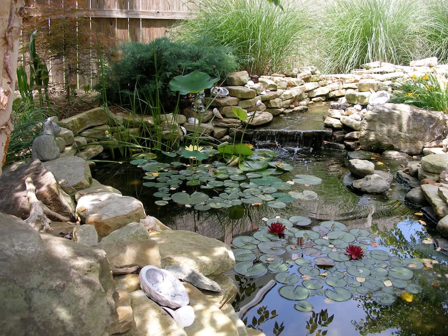 Sit outside next to the Koi pond and enjoy the calming sound of waterfalls and the shaded patio. Watch the fish, birds bath and turtles bask in the sun.