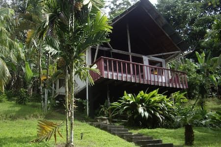 Cabin at jungle's edge in a tropical orchard, close to surf and center of Pavones.  Great wildlife watching from the hammock on your porch.  Screened  BR with double bed, loft with 2 single beds (mosquito nets), private bath, living room, kitchenett
