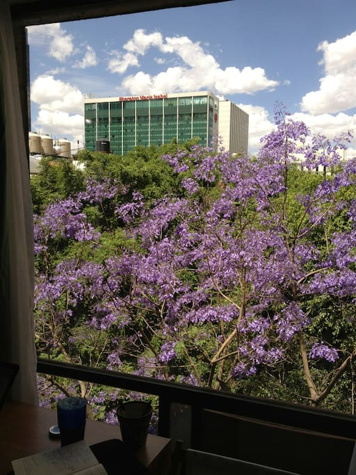 The jacaranda tree outside the window blooms in spring.