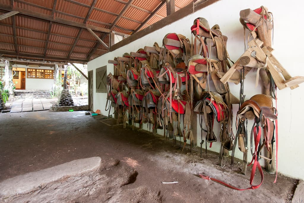 Saddles for our team of horses you can ride through the rainforest