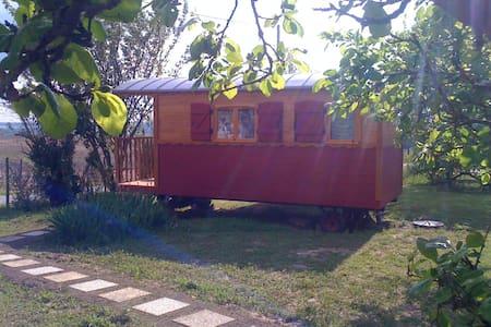 B&B Wooden Caravan in the vineyards - Chatka