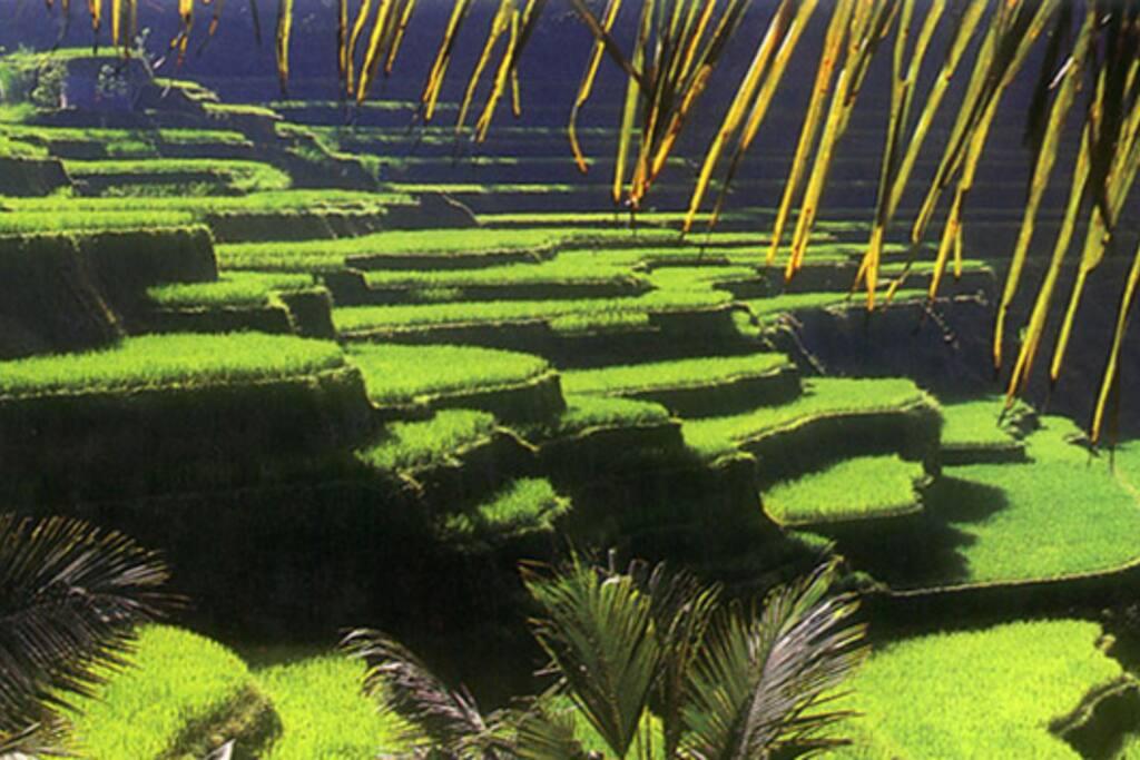 Ubud Greeneries