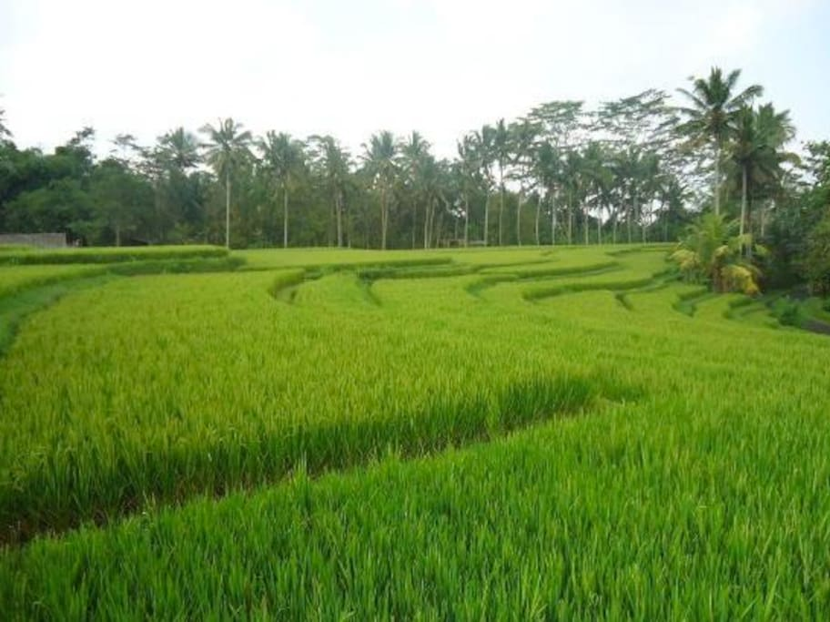 Payangan greeneries
