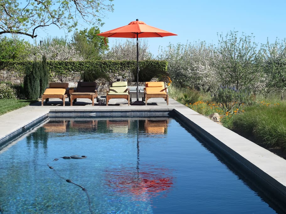Springtime by the pool, apple trees in bloom and California poppies abound