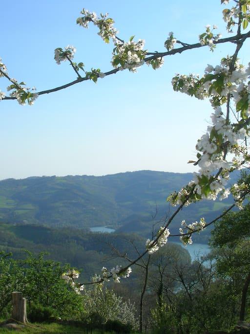 dettaglio del ciliegio in fiore e la vallata del Chiascio